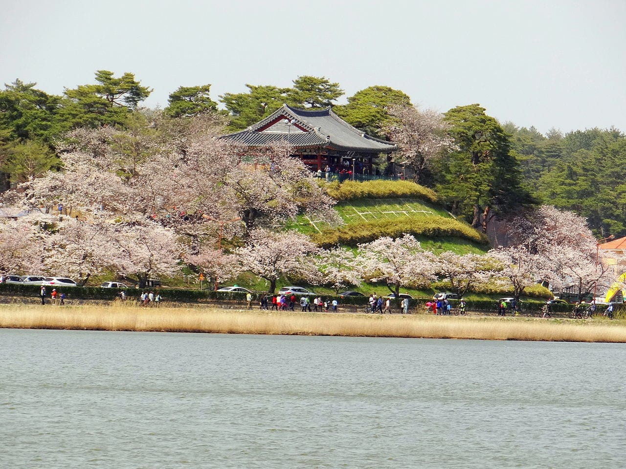 Gyeongpo Lake Cherry Blossoms