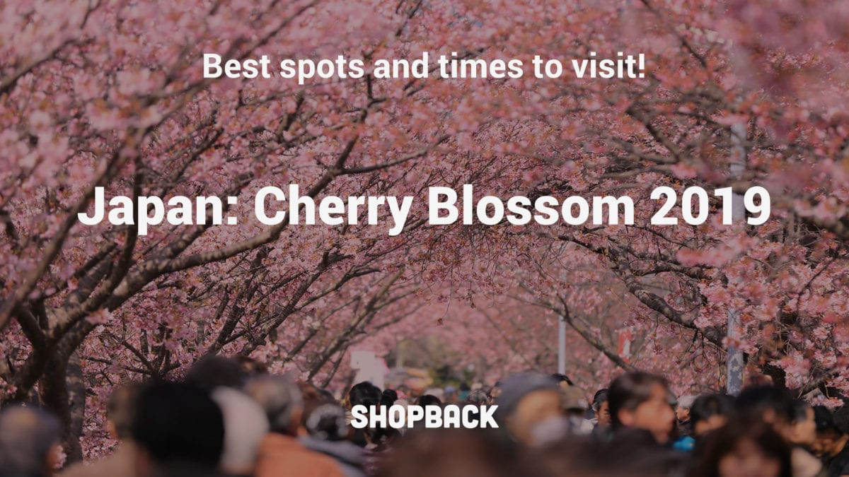 Japan Cherry Blossom Season 2019: It Is Coming Earlier This Year!