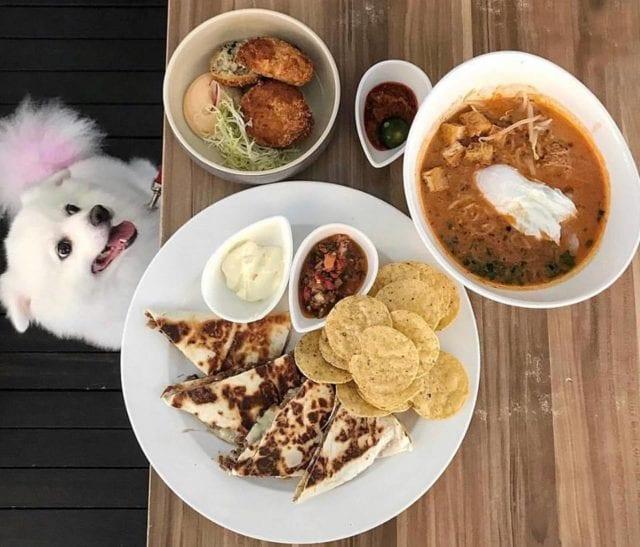 food and dog