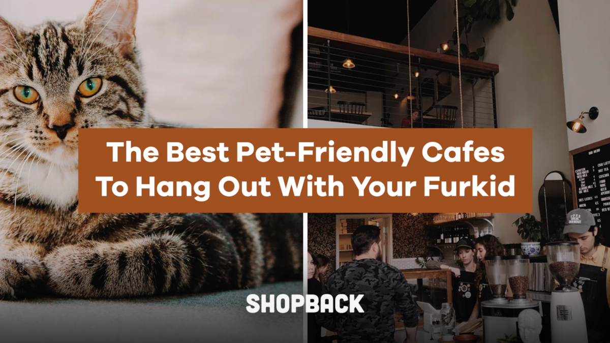 The Best Pet-Friendly Cafes To Hang Out With Your Furkid