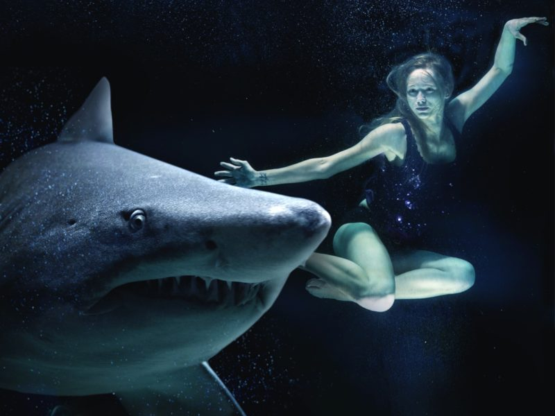 Shark with lady swimming by its side