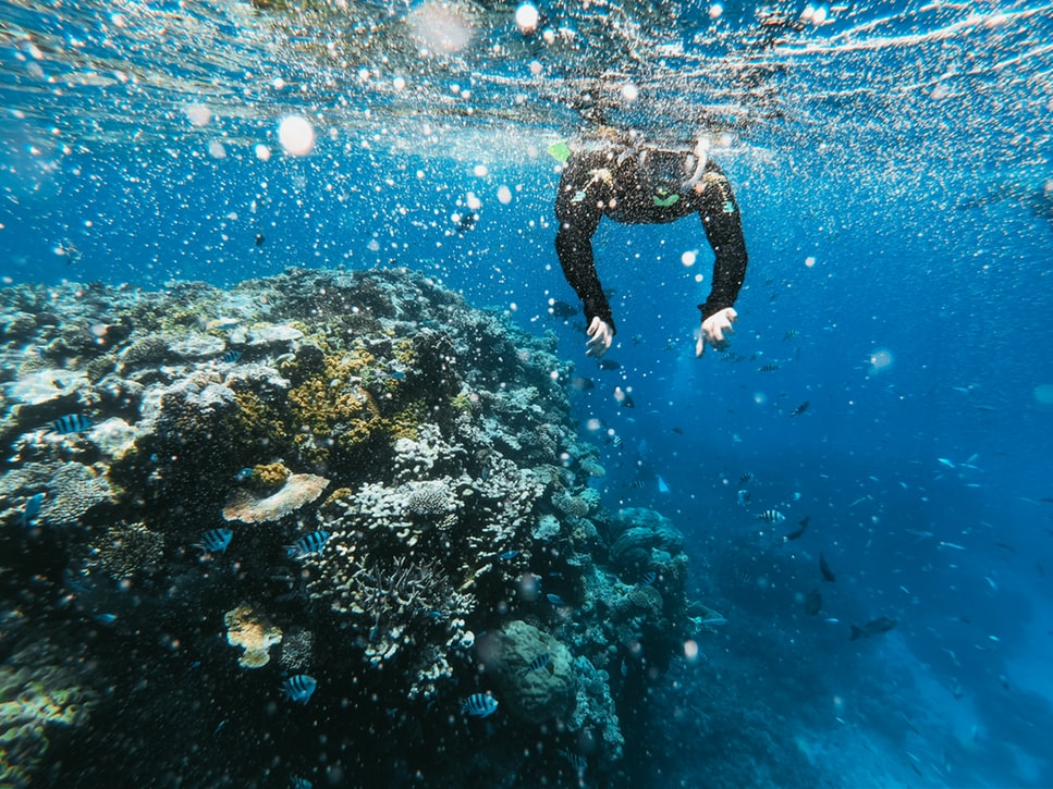 man scuba diving near coral reefs
