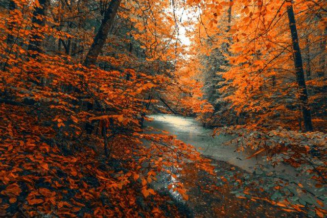 lake amongst autumn foliage and orange leaves