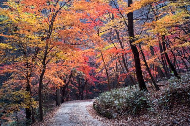 road down autumn trees