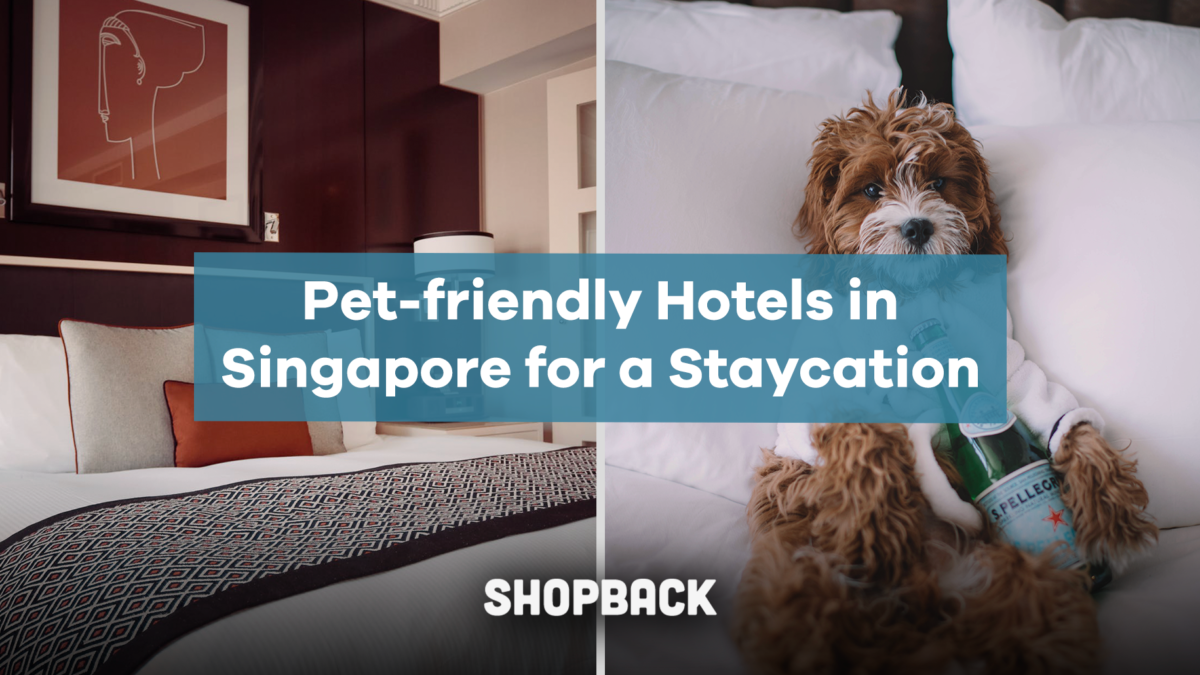 5 Pet-friendly Hotels for a Purrfect Staycation with your Furry Friend