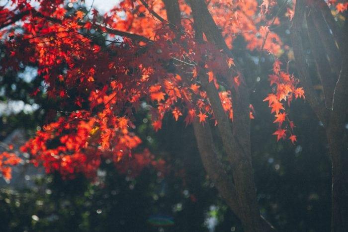 ซัปโปโร ฤดูใบไม้ร่วง