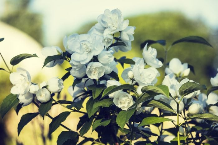จัดสวนหน้าบ้าน สวนสวย ไอเดีย จัดสวน จัดสวนหน้าบ้านง่ายๆ แต่งสวนหน้าบ้าน การจัดสวนหน้าบ้าน จัดสวนหน้าบ้านแบบประหยัด ต้นไม้จัดสวน ปลูกต้นไม้หน้าบ้าน ต้นไม้แต่งสวน จัดสวนไม้มงคล จัดสวนต้นไม้มงคล