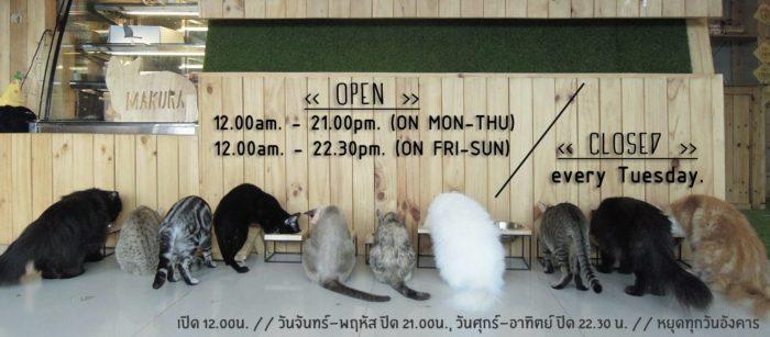Cafe แมว Cafe หมา เน้นแมว