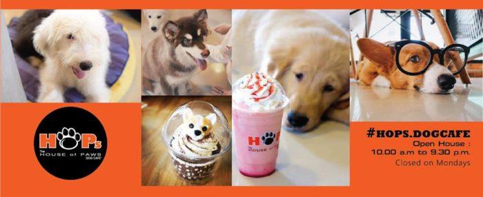 Cafe แมว Cafe หมา สยาม