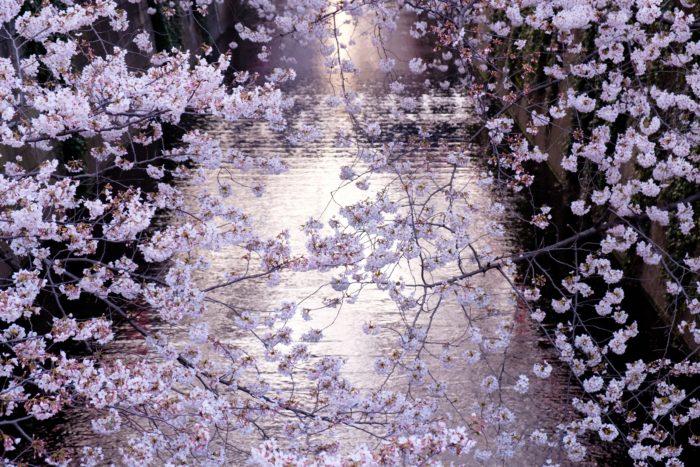 เที่ยวญี่ปุ่นเดือนเมษายน 1 เที่ยวญี่ปุ่นเดือนเมษายน เมษาเที่ยวไหนดี เที่ยวญี่ปุ่นเมษายน เมษาญี่ปุ่น เที่ยวญี่ปุ่นช่วงเมษา โตเกียวเมษายน ไปญี่ปุ่นเดือนเมษา