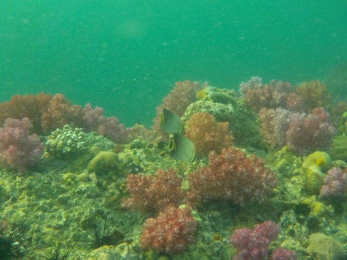 เที่ยวเกาะหลีเป๊ะ ร่องน้ำจาบัง ปะการัง 7 สี