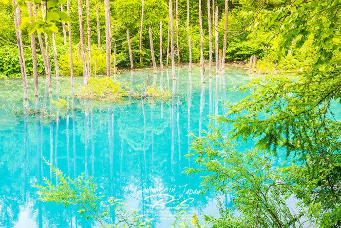 เที่ยวญี่ปุ่นหน้าร้อน Blue Pond