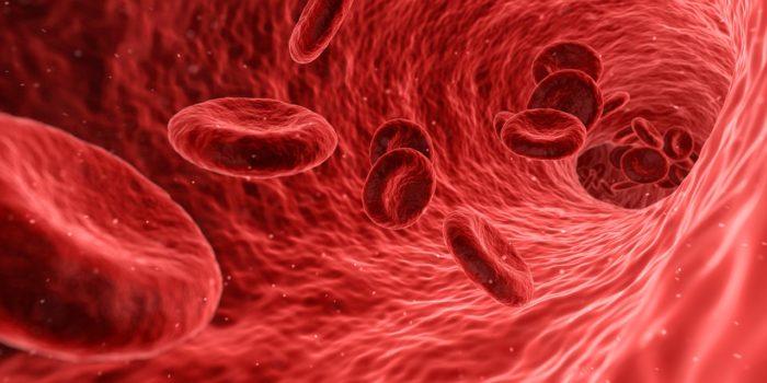 ข้อดีของการบริจาคเลือด ได้ตรวจสุขภาพแบบฟรีๆ