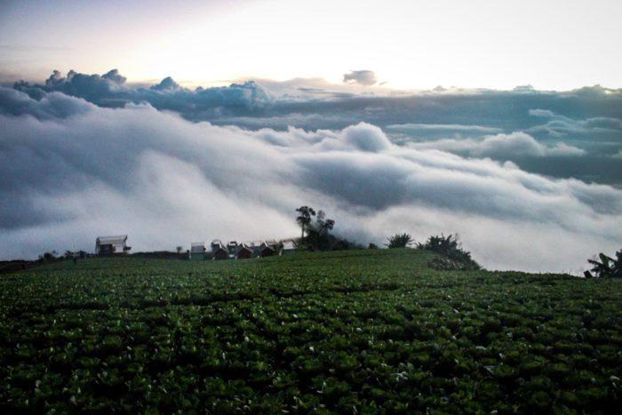 ภูทับเบิกหน้าฝน ไร่กะหล่ำปลี ภูทับเบิก ที่เที่ยวเพชรบูรณ์ เที่ยวเพชรบูรณ์ เที่ยวภูทับเบิก