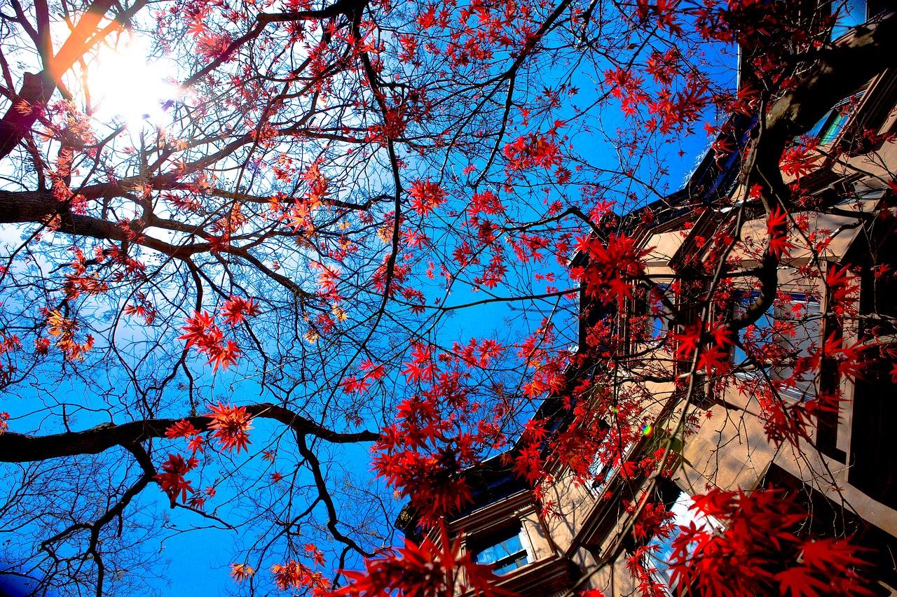 พยากรณ์ใบไม้เปลี่ยนสี สถานที่ท่องเที่ยวญี่ปุ่น เที่ยวญี่ปุ่นด้วยตัวเอง เที่ยวญี่ปุ่นใบไม้เปลี่ยนสี