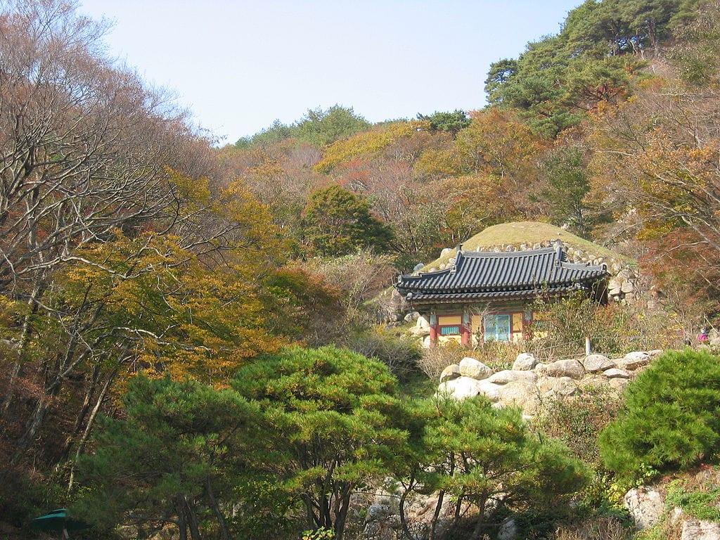 ซากุระ เกาหลี เที่ยวเกาหลี ที่เที่ยวเกาหลี สถานที่ท่องเที่ยวเกาหลี