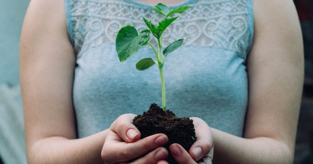 ต้นไม้มงคล ต้นไม้ ต้นไม้ปลูกในบ้าน ต้นไม้โตเร็วบังแดด