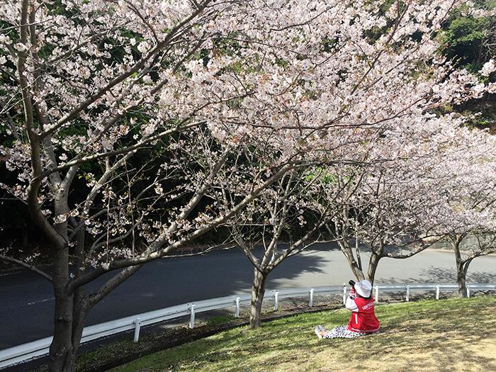 shizuoka, ชิซูโอกะ, shizuoka เที่ยว, เที่ยว nishiizu