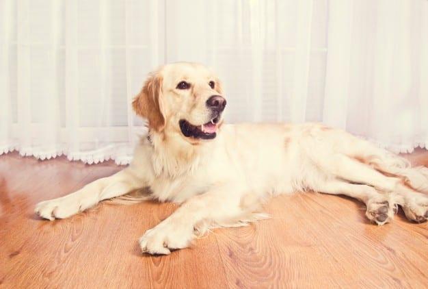 พันธุ์สุนัข หมาพันธุ์เล็ก หมากระเป๋า สุนัขพันธุ์ต่างๆ