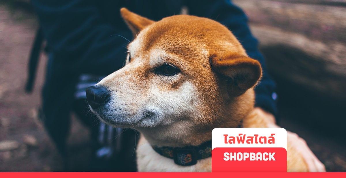 รวม 10 สุนัขพันธุ์ต่างๆ สุดน่ารัก ที่คนรักหมาในไทยนิยมเลี้ยงที่สุด 2019