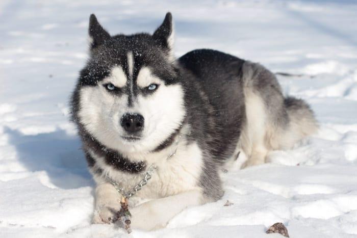 สุนัขน่ารักๆ, สุนัขน่าเลี้ยง