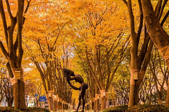 เที่ยวญี่ปุ่นที่เที่ยวญี่ปุ่น เที่ยวเซนได เซนได ใบไม้เปลี่ยนสี