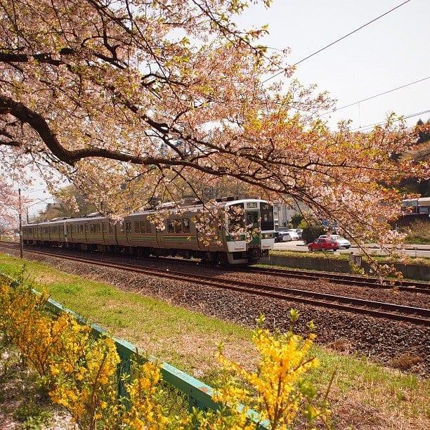 เที่ยวญี่ปุ่น ที่เที่ยวญี่ปุ่น เที่ยวเซนได เซนได ใบไม้เปลี่ยนสี