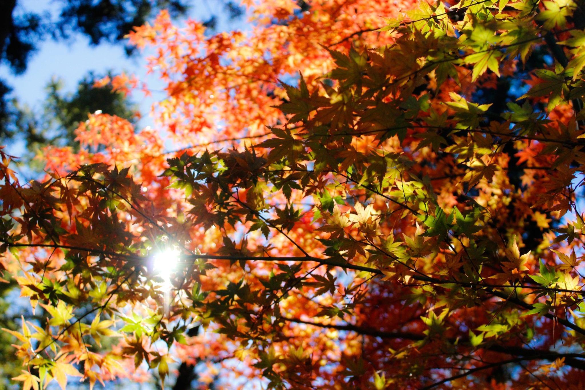 ใบไม้เปลี่ยนสีญี่ปุ่น เที่ยวญี่ปุ่น สถานที่ท่องเที่ยวญี่ปุ่น ที่เที่ยวญี่ปุ่น