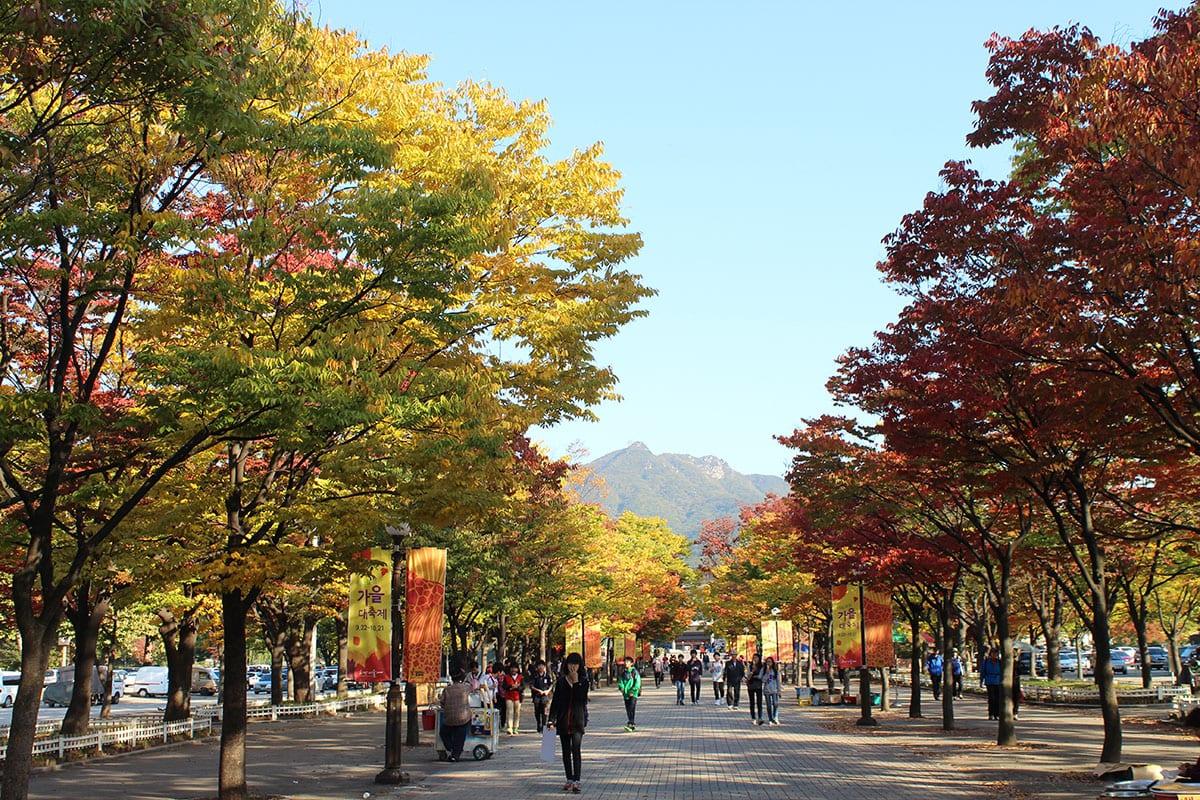 เที่ยวเกาหลี ที่เที่ยวเกาหลี เที่ยวเกาหลีด้วยตัวเอง ใบไม้เปลี่ยนสี เกาหลี