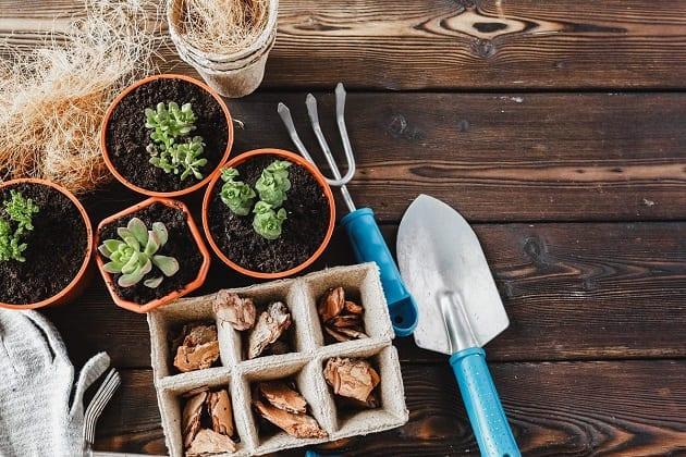 ปลูกผักแนวตั้ง, การปลูกผักในพื้นที่แคบ