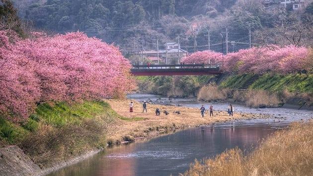ซากุระ คาวาซุ, คาวาซุ ซากุระ 2020