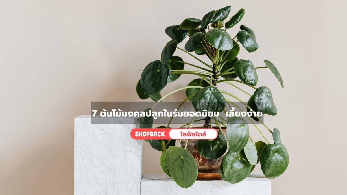 7 ต้นไม้มงคลปลูกในร่มยอดนิยม  เลี้ยงง่ายปลูกในบ้านได้ แดดน้อยก็รอด!