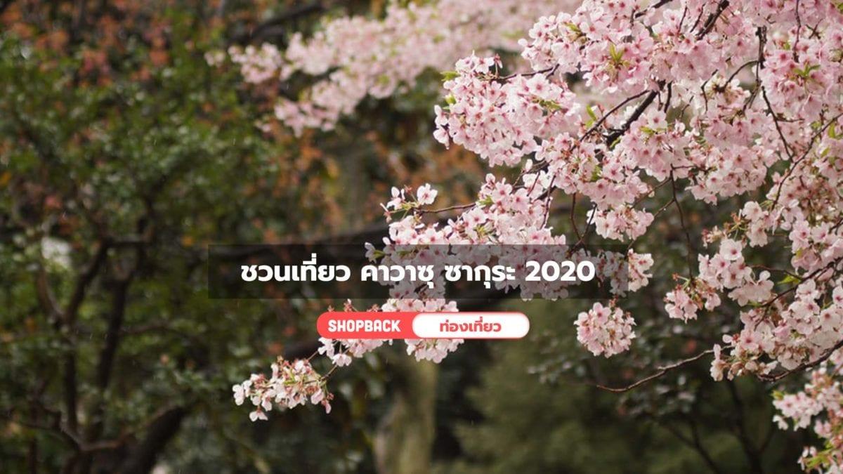 ชวนเที่ยว คาวาซุ ซากุระ 2020 เมืองญี่ปุ่นที่ซากุระบานก่อนใคร พร้อมที่เที่ยวน่าไป