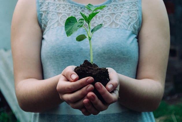 วิธีปลูกผักสวนครัว, ปลูกพืชผักสวนครัว