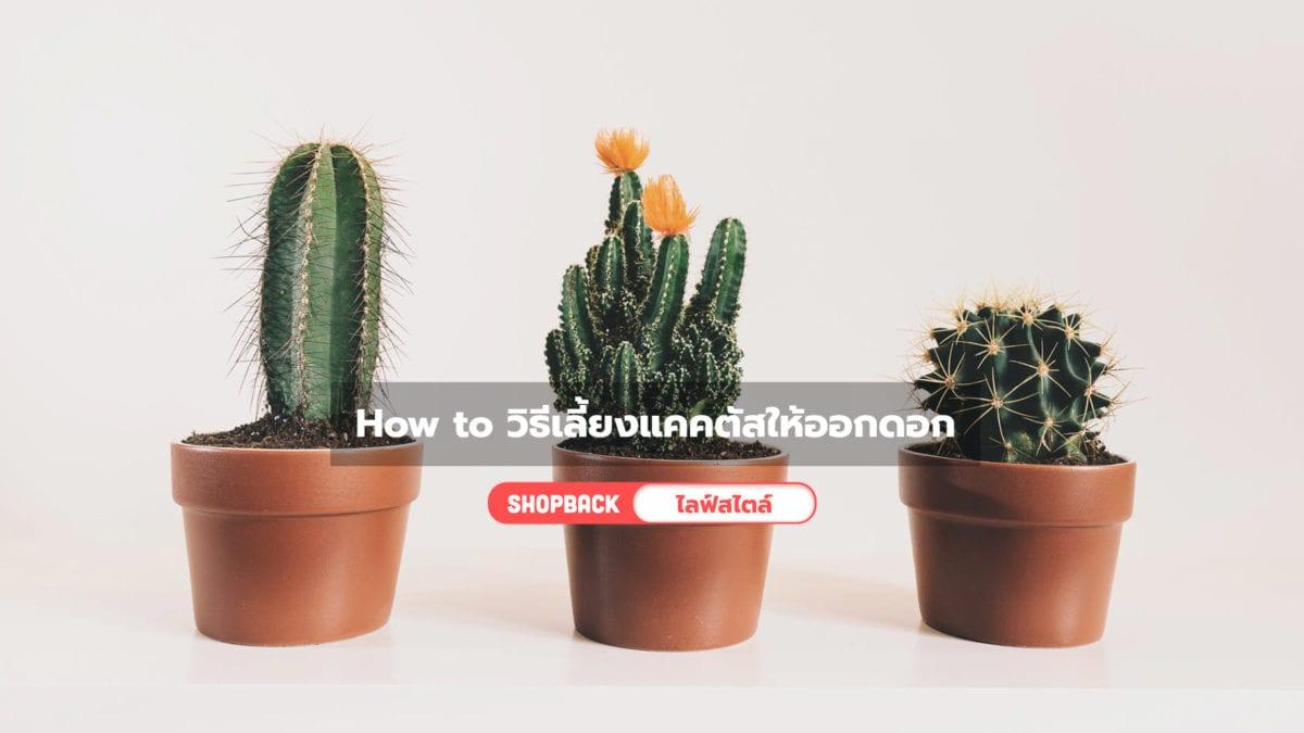 How to วิธีเลี้ยงแคคตัสให้ออกดอกง่ายๆ มือใหม่เลี้ยงได้แน่นอน