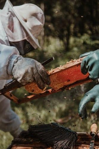 ประโยชน์ของน้ำผึ้งต่อผิว, 10 ประโยชน์ของน้ำผึ้ง