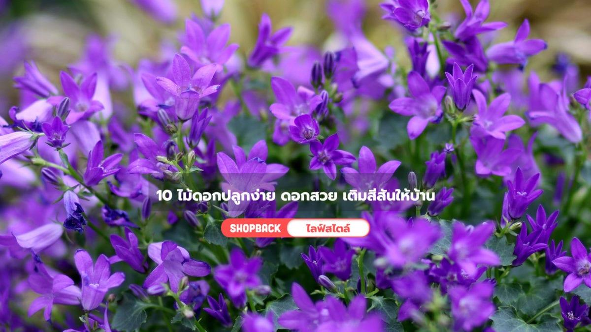 10 ไม้ดอกปลูกง่าย มือใหม่ก็ปลูกได้ ช่วยเติมสีสันให้บ้านสดใส