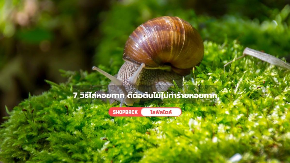 7 วิธีไล่หอยทากฉบับสันติ ได้ผลจริง แถมไม่ทำร้ายทั้งหอยทากและต้นไม้ของเรา