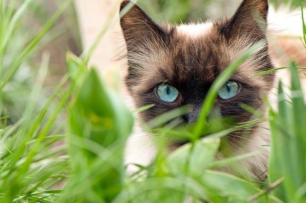 การมองเห็นของแมว,การมองเห็นของสัตว์