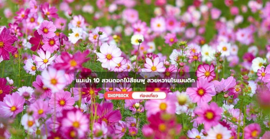 สวนดอกไม้สีชมพู, ชื่อดอกไม้สีชมพูสวยๆ แปลกๆ