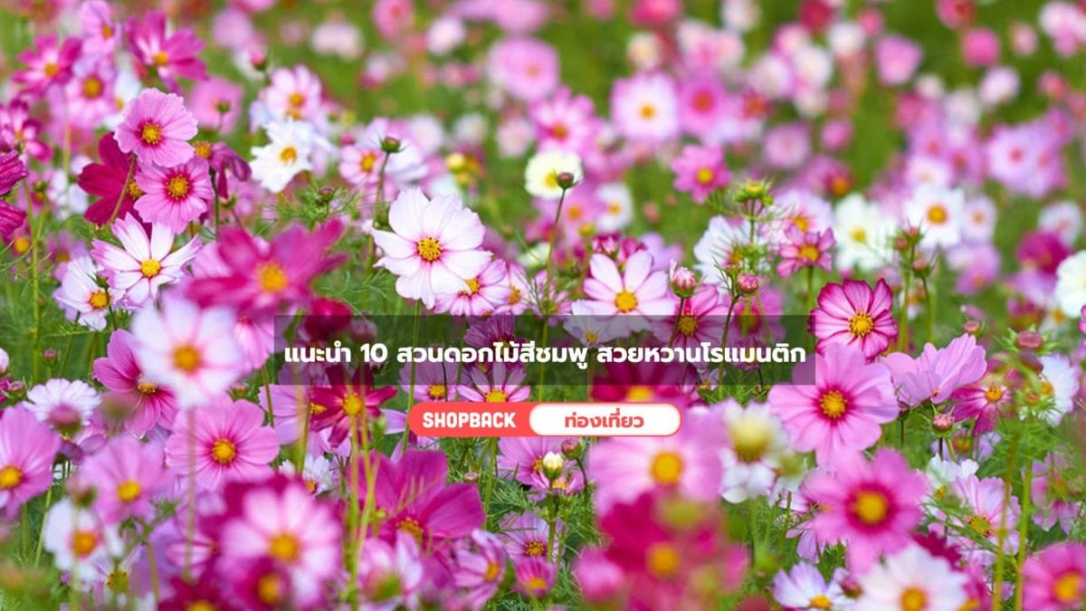 10 สวนดอกไม้สีชมพู สวยหวานโรแมนติก ถ่ายรูปสวย บรรยากาศชวนฝัน