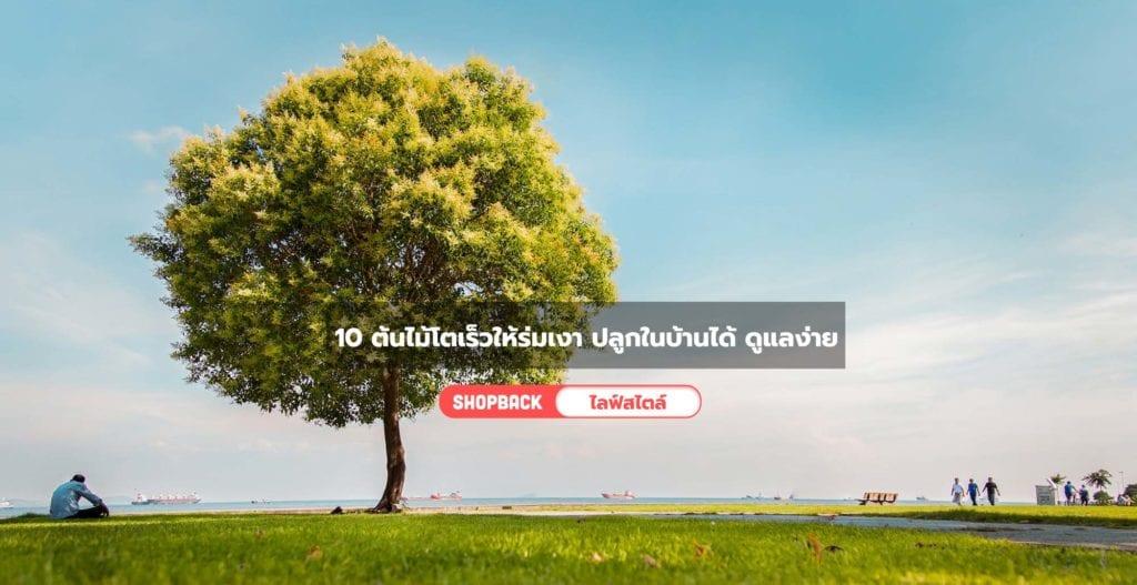 ต้นไม้โตเร็วให้ร่มเงา, ต้นไม้บังแดดโตเร็ว
