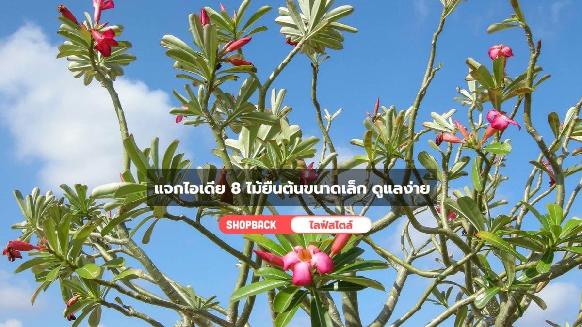 แจกไอเดีย 8ไม้ยืนต้นขนาดเล็ก ปลูกง่าย เติมความสวยให้สวนขนาดเล็กได้ทุกวัน