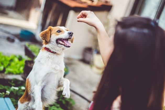 วิธีเล่นกับสุนัข, วิธีเล่นกับหมา