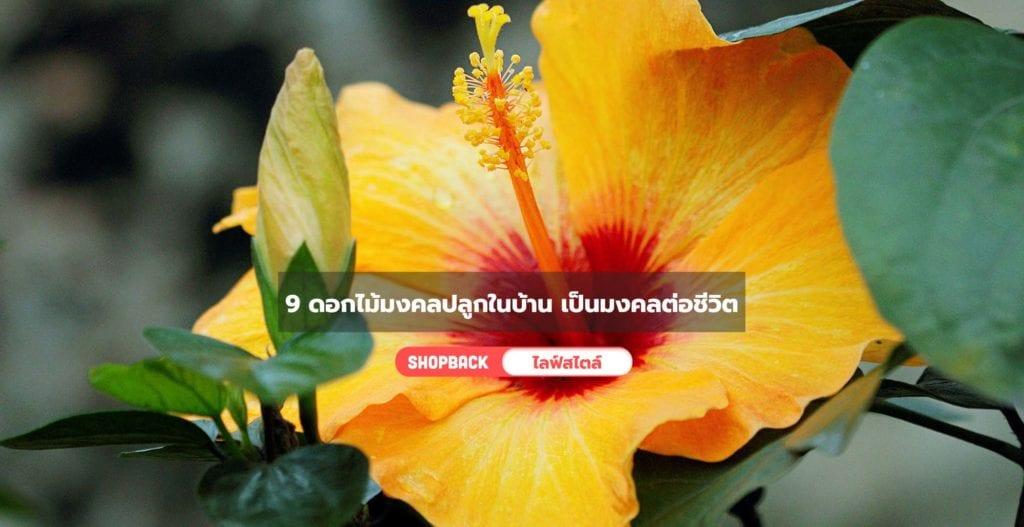 ดอกไม้มงคลปลูกในบ้าน, ไม้ดอกมงคล