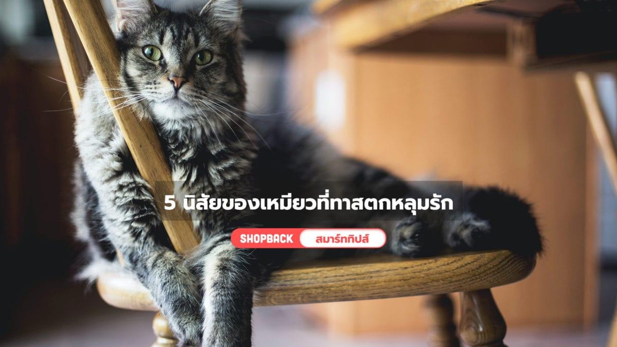 รักแมวต้องรู้ ! 5 นิสัยของเจ้าเหมียวที่ทำให้ทาสต้องตกหลุมรัก