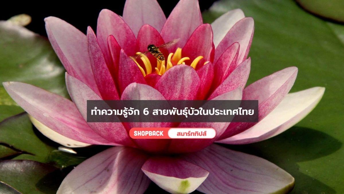 ดอกบัวมีกี่ชนิด? ทำความรู้จักสายพันธุ์บัวที่มีอยู่ในประเทศไทยกัน