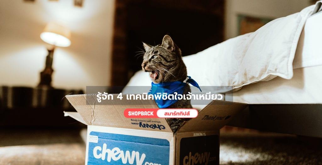 วิธีทำให้แมวหายกลัว, วิธีเลี้ยงแมวน้อย