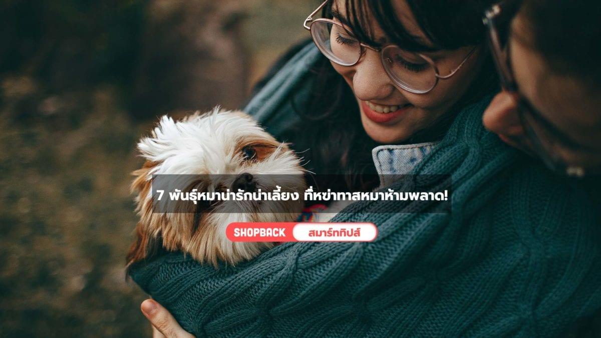 เลี้ยงหมาพันธุ์ไหนดี ? แนะนำหมาน่าเลี้ยงสุดน่ารัก เลี้ยงง่ายสำหรับมือใหม่