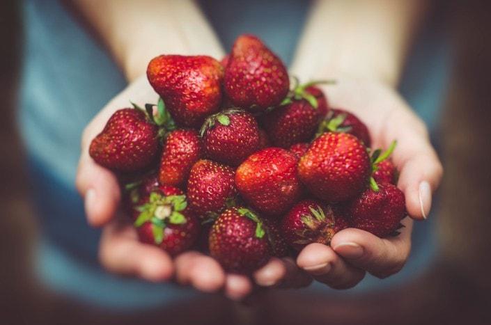 草莓豐收加倍獲利